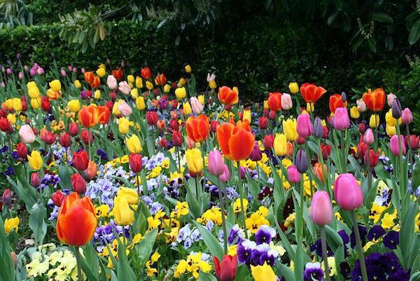 flores-copia