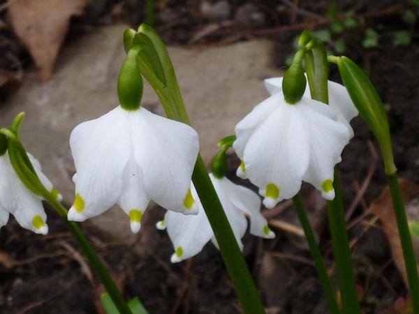 florecillas2