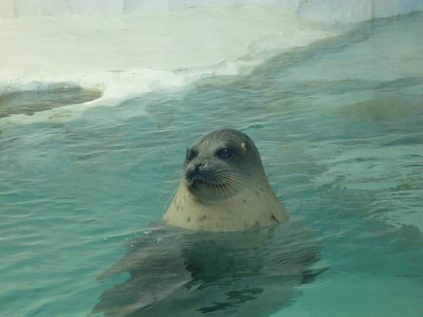 Acuario Osaka - foca