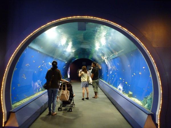 Acuario Osaka2