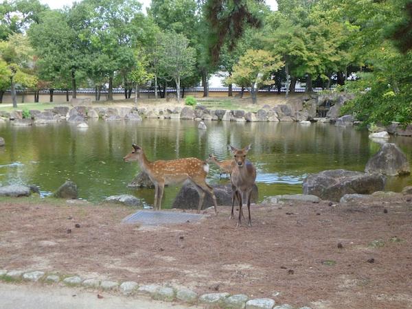 Bambis1