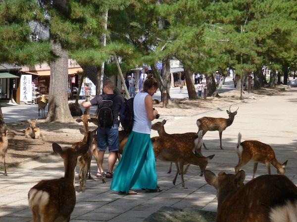 Bambis3
